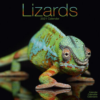 Kalenteri 2021 Lizards