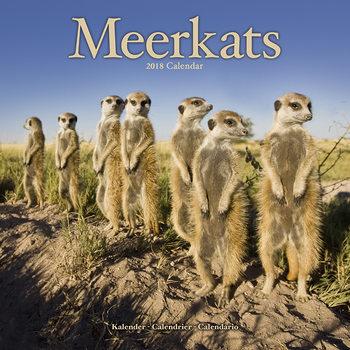 Kalenteri 2018 Meerkats