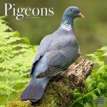 Kalenteri 2020  Pigeons
