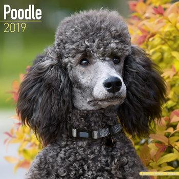 Kalenteri 2019  Poodle