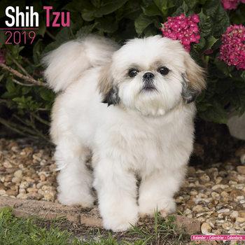 Kalenteri 2019  Shih Tzu