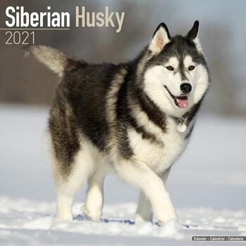 Kalenteri 2021 Siberian Husky