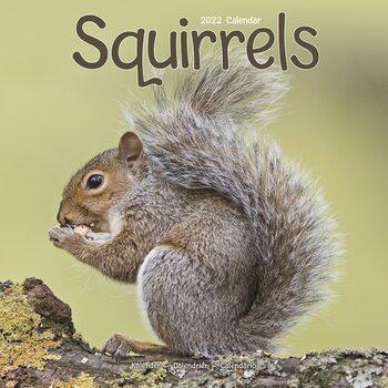 Kalenteri 2022 Squirrels