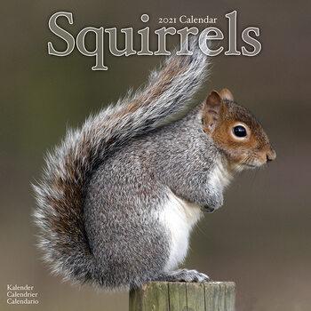 Kalenteri 2021 Squirrels
