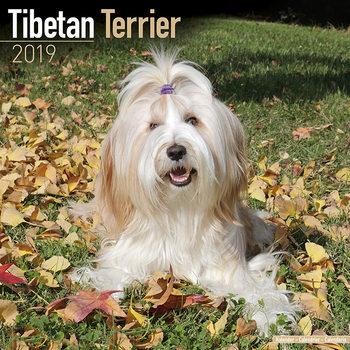 Kalenteri 2019  Tibetan Terrier