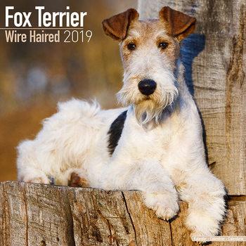 Kalenteri 2019  Wirehaired Fox Terrier