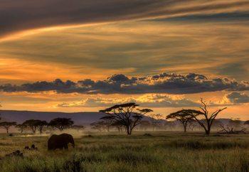 Africa Valokuvatapetti