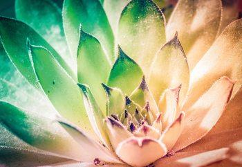 Aloe Plant Green And Orange Valokuvatapetti