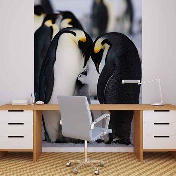 Animals Penguin Valokuvatapetti