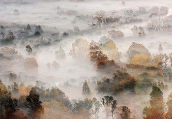 Autumn Colours In The Fog Valokuvatapetti