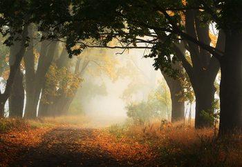 Autumn In Poland Valokuvatapetti