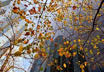 Autumn In The City Valokuvatapetti