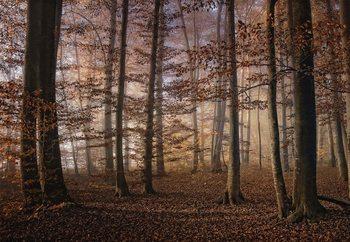Autumn In The Forest Valokuvatapetti