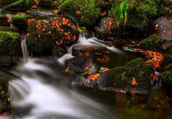 Autumn Melodies Valokuvatapetti