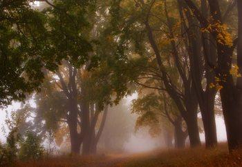 Autumn Mist Valokuvatapetti