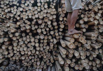 Bamboo Valokuvatapetti
