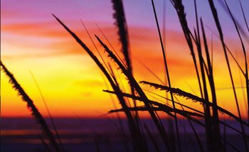 Kuvatapetti, TapettijulisteBeach Sunset