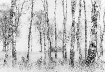 Black And White Valokuvatapetti