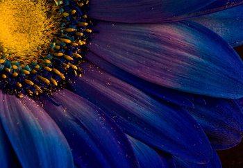 Blue Rays Valokuvatapetti