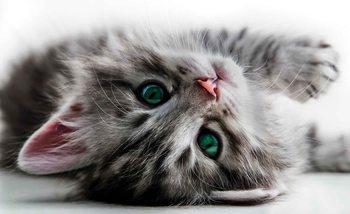 Cat Kitten Valokuvatapetti