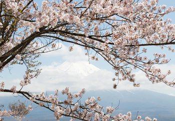 Cherry Blossom Tree Valokuvatapetti