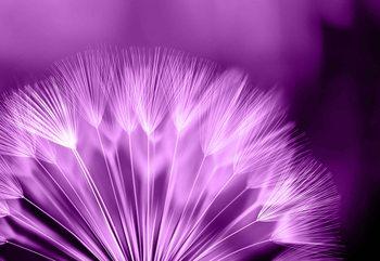 Dandelion Flower Valokuvatapetti