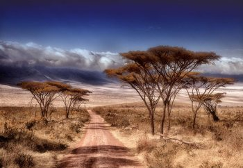 Dry Season Valokuvatapetti