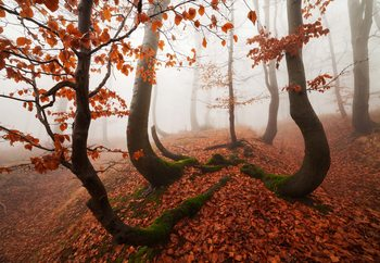 Fairytale Forest Valokuvatapetti