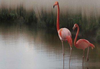 Flamingos On The Lake Valokuvatapetti
