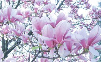 Flowers Magnolia Valokuvatapetti