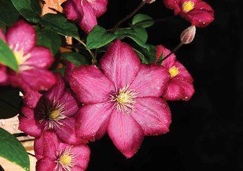 Flowers Natur Valokuvatapetti