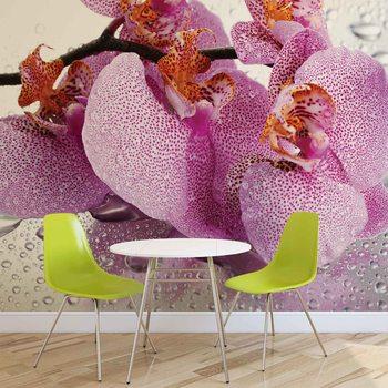 Kuvatapetti, Tapettijuliste Flowers Orchids Drops