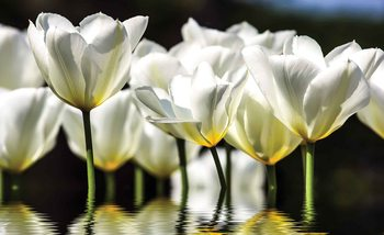 Kuvatapetti, TapettijulisteFlowers Tulips