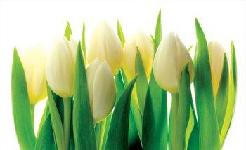 Flowers Tulips Nature Valokuvatapetti