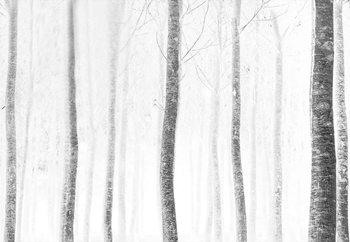 Forest Valokuvatapetti