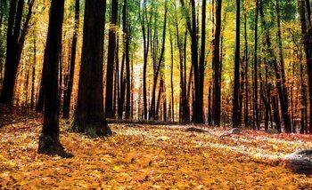 Forest Woods Valokuvatapetti