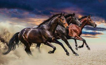Horse Pony Valokuvatapetti