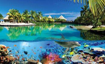 Kuvatapetti, TapettijulisteIsland Paradise With Corals Dolphin