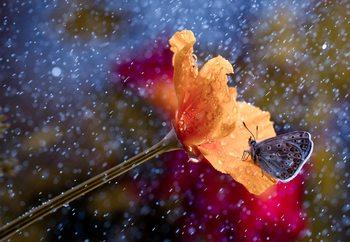 It's Raining Again Valokuvatapetti