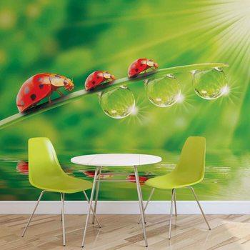 Ladybird Valokuvatapetti