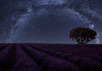 Lavender In Brihuega Valokuvatapetti