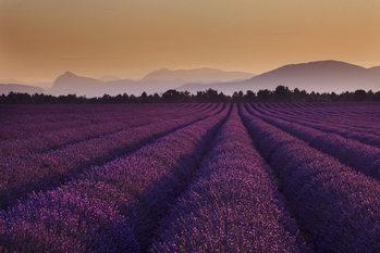Laventeli - Lavender Fields Kuvatapetti, Tapettijuliste