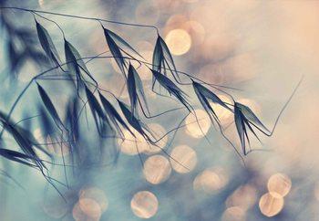 Macro Grass Valokuvatapetti