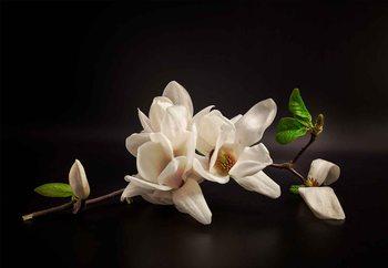 Magnolia Valokuvatapetti