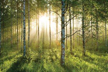 Metsä - Sunbeams Kuvatapetti, Tapettijuliste