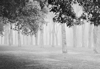 Morning Fog Valokuvatapetti