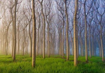 Morning Of The Forest Valokuvatapetti