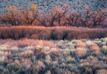 Nature'S Paintbrush Valokuvatapetti