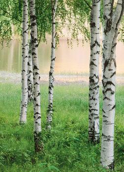 NORDIC FOREST Kuvatapetti