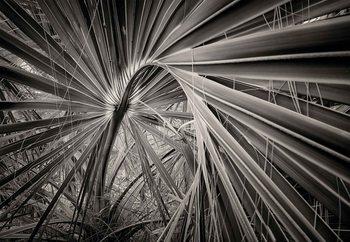 Palm Tree Leave Valokuvatapetti